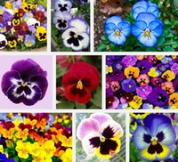 Wholesale Garden plant mixed pansy seed flowers colourful yellow blue pansy bright red color of miniascape seed bag