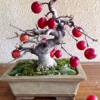 Cheap Free Shipping 20 bonsai apple tree Seeds Bonsai Tree Fruit Delicious Good Feeling