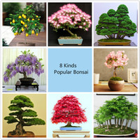 Cheap Potted plant seeds ,8 kinds Bonsai Tree Seeds, 227Pcs Popular Plant Seeds Perfect DIY Home Garden Bonsai package
