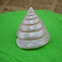 aquariums furniture - Natural conch shell ornaments furniture decoration Seracs Lo Lo TA coral aquarium Landscaping