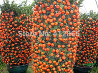 Cheap 30 Pieces  Bag Top Selling High Quality Bonsai Sweet Orange Tree Seeds Organic Fruit Tree Seeds Free Shipping For Home Garden 3bags per lot
