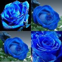 Семена цветущие Цены-BLUELOVER сезоны семян Семена Комнатные растения во двор Балкон горшечных цветов Голубая роза Голубая роза Семена Семена HY1169