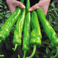 Wholesale Non Hybrid Giant Pepper Seeds Vegetable Growing Trouble Free Garden