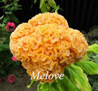 Wholesale Giant Yellow Cockscomb Flower Seeds Celosia Very Easy to grow DIY Home Garden Flower
