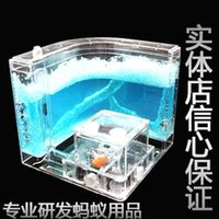 ant farms - Wang Shi ant ant farm home pet Museum ant Camponotus japonicus workers send mainland provinces shipping Does not contain the ants
