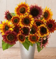 sunflower seed - Mixed Sunflower Seeds Different Kinds to Select Easy to Grow Beautiful Flower Light up Your Garden