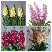 Wholesale Matthiola incana Mixed Color Stock Flower Seeds Great Cut Flower Variety Fragrant