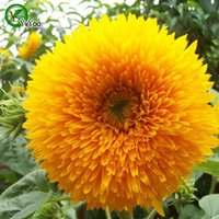 Wholesale Yellow Sunflower Seeds Bonsai Flower Plant Seeds Very Fragrant Particles Q045