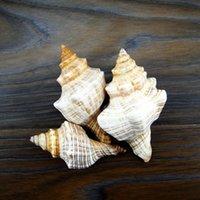 aquarium long - Pleuroploca filamentosa about cm long spiral conch shell wedding gift aquarium floor home furnishings