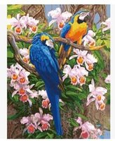Wholesale diy digital oil painting by numbers home decoration craft gifts birds parrot x50 picture paint on canvas G355