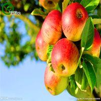 apple tree decorations - Bonsai fruit Apple Tree Seeds garden decoration plant B37