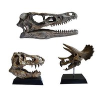 Wholesale 3 Dinosaur Skull Small Model T Rex Triceratops Velociraptor model