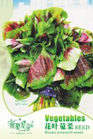 amaranth seed - Fast Growing Vegetable three colored amaranth seeds days harvest red spinach Seeds bag Garden bonsai amaranth seeds bags per