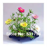 Wholesale HighQuality pieces of these seeds pine needles double mixed color balcony planting peony sunflower seeds