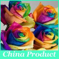 al por mayor rainbow rose seeds-500 semillas semilla rara Rose del arco iris de colores de las flores del amante del jardín de plantas raras arco iris subió semillas de flores