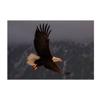 bald eagle flying - Diamond painting diamond Mosaic embroidery Bald eagle flying through the air decorative pictures rhinestones hobbies crafts E595