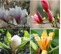 Wholesale piece rare four color magnolia tree seed garden decoration