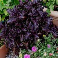 basil pot - Purple basil Seeds Flower Pot Planters Garden Bonsai Grass Seed Particles W023