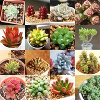 Wholesale 60pcs Pack Succulent Seeds Mini Potted Flower Seeds Anti radiation Styles