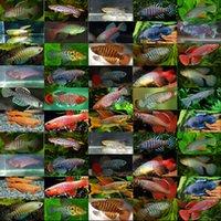 automatic fish feeders - Magic fish high hatching eggs medaka eggs tropical fish eggs pet magic fish in bulk
