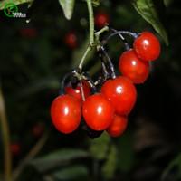 beautiful bean bags - Acacia Bean seeds Bonsai Tree Seeds Very Beautiful Indoor Tree Home Garden plant particles bag m002