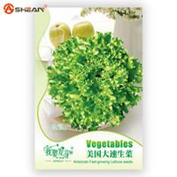 american vegetables - Original Pack Lettuce Seeds Balcony Potted Vegetable American Fast growing Lettuce Seeds