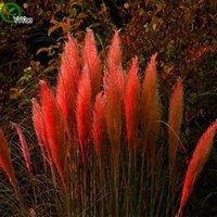annual garden plants - Pampas grass seeds Bonsai Seeds Garden Plants Grass Seeds Annual Herb Particles m008