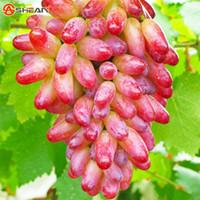 Wholesale 100 Seeds Pack Beauty Finger Grape Seeds Advanced Fruit Seed Natural Growth Grape Sweet Kyoho Grape Gardening Fruit Plants