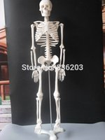 Wholesale cm life size quot Human skeleton anatomical model Anatomical Anatomy Skull Sculpture Head body model Muscle Bone Artist