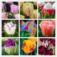 Семена цветущие Цены-5pcs / bag Красивейшие и цветастые семена цветка Perfume тюльпана Высокосортный цветки бонзаев цветка радуги домашний сад сада