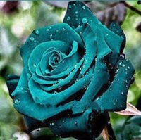 annual bulbs - New Rose Flower Seeds Pieces Dark Green Annual Plants Bulbs Outdoor Living Seedling