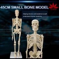aids paper - cm human skeleton model teaching aid mini skeleton