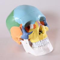 anatomical skeleton models - life size Human anatomy skull brain skeleton anatomical dental dentist lab anatomia model skin in trauma for bag refrigerator