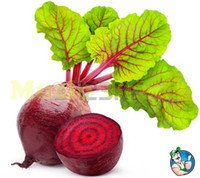 Common beets seeds - 1bag rare Japanese gaint beet seeds bonsai delicious sugar NO GMO vegetable seeds plant cherry home garden