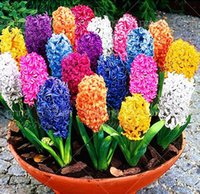 balls seeds - 1pcs bag Hyacinth ball root Hyacinth flower potted bonsai balcony flower seeds DIY garden Indoor green plants easy to grow
