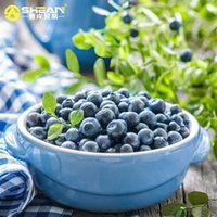 Wholesale A Pack Black Blueberry Seed Windowsill Garden Terrace Roof Fruit Seed potted bonsai Tree Plant Vaccinium Seed