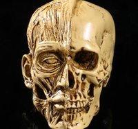 artistic human - Artistic Sketch resin skull model high precision model of human musculoskeletal Home Decoration