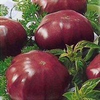 Wholesale seeds Black Elephant Tomato Seeds seeds professional pack organic big sweet tomato TS383T
