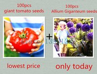 Wholesale 100pcs giant tomato seeds and Purple Giant Allium Giganteum Fruit and vegetable bonsai flower seeds easy to grow