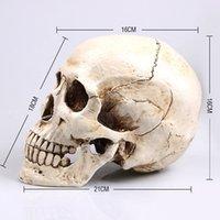 anatomy human brain - Human Skull brain Resin Replica Medical Model Life size anatomy skeleton dental anatomical brain anatomia Exploded skull