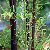 beautiful garden trees - Rare Black Bamboo Seeds Beautiful Bonsai Seeds for DIY Home Garden Household Items