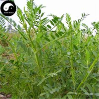 astragalus plants - Buy Astragalus adsurgens Seeds Plant Forage Grass
