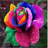 Wholesale Rare Magical Colorful Rainbow Rose Flower Seeds for Home Garden Plants Cheap Price