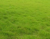 bermuda grass seed - 10000pcs a Set Bermuda Grass Seed Cherish Life Cherish Chance Feel Free To Contact Seller Thank You