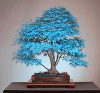 Семена цветущие Цены-Бонсай голубой клен дерево семена бонсай дерево. Редкий голубой японский клен семена балкон растения для дома сад цветок
