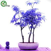 al por mayor árbol bonsai-Bonsai árbol semillas de plantas MAPLE 100% verdadera semilla en especie de tiro planta de jardín de origen 20 partículas / bolsa