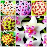 Wholesale 1Bag Hot Sale Rare hoya seeds Japanese bulb EXOTIC FLOWER seeds Bonsai Cherry Tomato Organic Home Garden