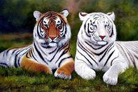 art wildlife - Stunning art Oil painting wildlife animals yellow and white tigers Genuine Handmade Animal Art oil Painting On Canvas Museum Quality zhon