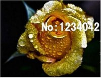 balcony flower pots - 100 Seeds Per Package Bonsai Gold Rose Flower Seeds Balcony Potted Barrier Flowers Garden Plants