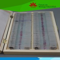 Wholesale Popular set histology slides set for Anatomy and Physiology Course in wooden box